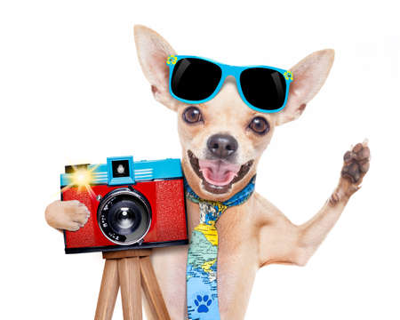 funny animals: cool tourist photographer dog taking a snapshot or picture with a retro old camera gesturing to say cheese
