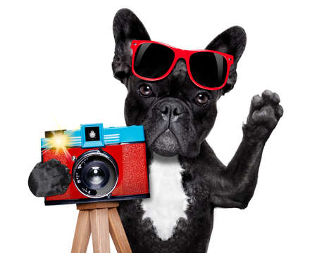 holiday pets: cool tourist photographer dog taking a snapshot or picture with a retro old camera gesturing  Stock Photo
