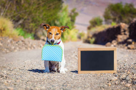 marcheur: jack russell chien abandonné et laissé tout seul sur la route ou de la rue Banque d'images