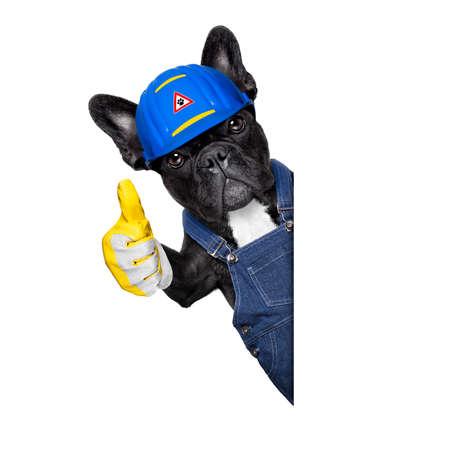 agree: trabajador perro manitas con el casco y el pulgar arriba, bien y estoy de acuerdo, listo para reparar, arreglar todo en casa, aislado en fondo blanco