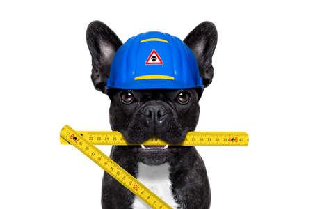 Travailleur de chien bricoleur avec un casque et mètre pliant, prêt à réparer, corriger et mesurer tout à la maison, isolé sur fond blanc Banque d'images - 43517881