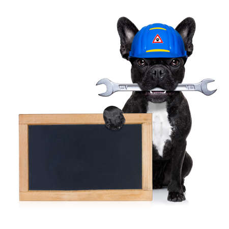 funny people: handyman dog worker with helmet  behind blank banner or blackboard, wrench in mouth ,ready to repair, fix everything at home, isolated on white background Stock Photo