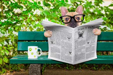 perrito: perro bulldog francés leyendo un periódico o una revista sentada en un banco en el parque, relajarse y tomar una taza de té o café
