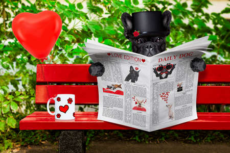 publishes: french bulldog dog reading a newspaper or magazine sitting on a bench at the park, dating and in love,