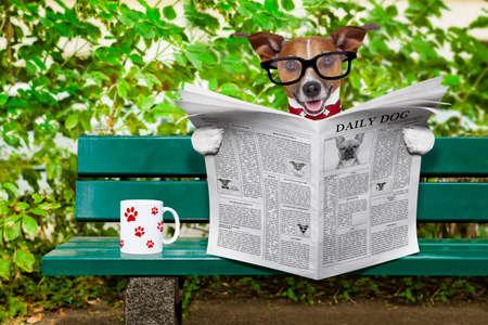 perros graciosos: jack russell perro leer un periódico o una revista sentada en un banco en el parque, relajarse y tomar una taza de té o café