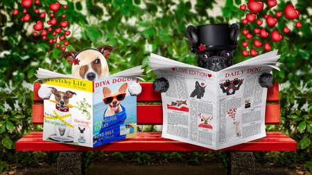 dog days: par de dos perros que leen un periódico o una revista sentada en un banco en el parque, acaba de casarse en un matrimonio o en luna de miel