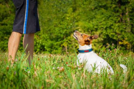 잭 러셀 강아지와 소유자, 놀이 또는 산책 야외있는 환자와 순종 대기 스톡 콘텐츠