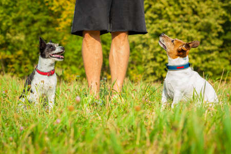 obedient: two  dogs and owner waiting for a play or a walk , outdoors being patient and obedient