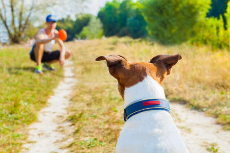 fetch: dog and owner playing with ball , toy or disc outdoors, dog is  waiting  and ready to play Stock Photo