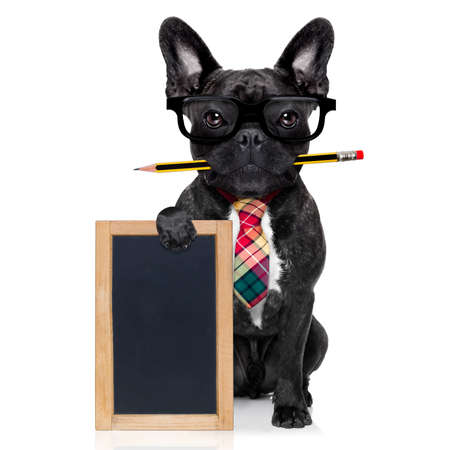 placard: office businessman french bulldog dog with pen or pencil in mouth holding a  blank banner or blackboard, isolated on white background