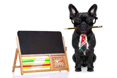 placard: office businessman french bulldog dog with pen or pencil in mouth beside a blank banner or blackboard, isolated on white background Stock Photo