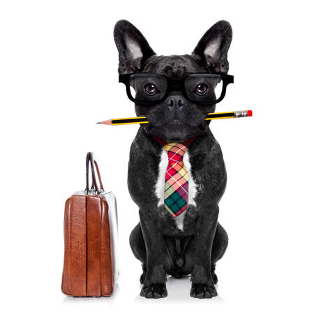 biznes: biuro biznesmen buldog francuski pies z piórem lub ołówkiem w ustach z torby lub walizki na białym tle