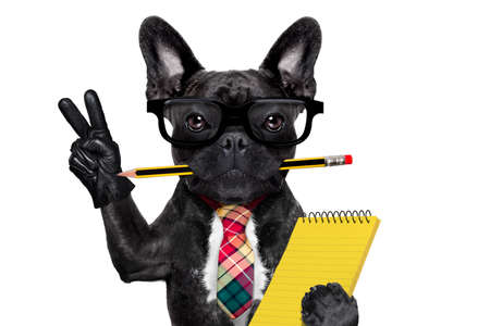 lapiz y papel: hombre de negocios oficina perro bulldog franc�s con la pluma o un l�piz en la boca que sostiene una libreta y paz o la victoria dedos aislados sobre fondo blanco