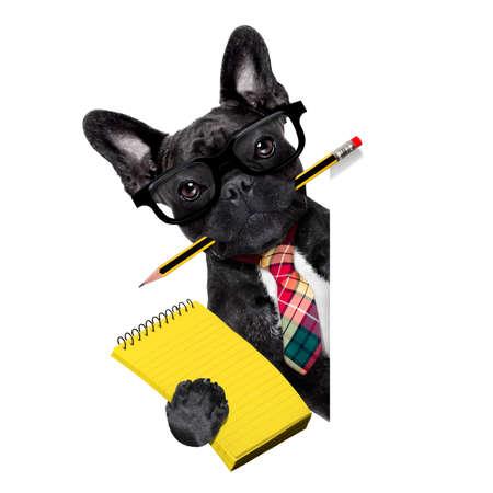 Homme d'affaires de bureau chien bouledogue français avec un stylo ou un crayon dans la bouche avec le bloc-notes derrière une bannière vide vide ou une pancarte, isolé sur fond blanc Banque d'images