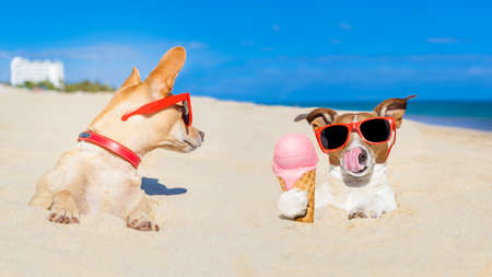 resor: par av två hundar, en slickar glass med tungan begravd i sanden på Ocean Beach i sommar semester semester, andra hund svartsjuk om det Stockfoto
