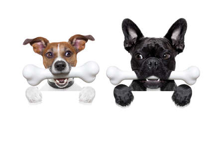 perros graciosos: mayor de dos hambre, y celoso perro lado a lado, detrás de una pancarta en blanco o pared, aislado en fondo blanco, la envidia en el aire Foto de archivo