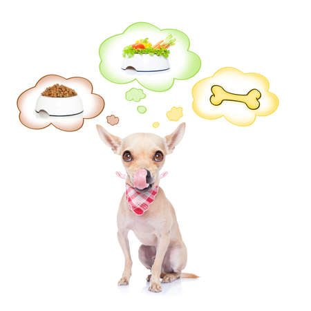 cute puppy: hungry chihuahua dog thinking about the choice between food bowl, vegan bowl or  a big bone , in 3 speech bubbles, isolated on white background
