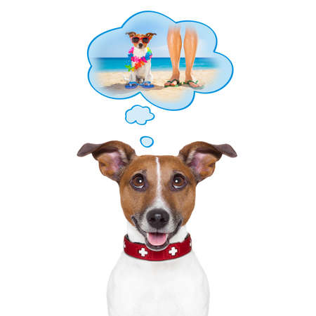hawaiian lei: jack russell dog thinking about the summer vacation holidays with owner at the beach, isolated on white background Stock Photo