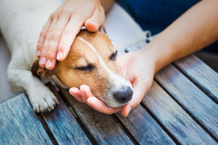pets: owner  petting his dog, while he is sleeping or resting  with closed eyes