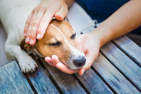 chory: Właściciel głaszcze swojego psa, a on jest w stanie uśpienia lub odpoczynku z zamkniętymi oczami Zdjęcie Seryjne