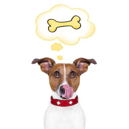 Hambre Jack Russell perro pensamiento y con la esperanza de un hueso grande, en una burbuja gran discurso, aislado en fondo blanco Foto de archivo - 44245614