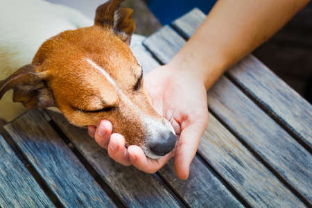 owner holding his dog in his hand, taking care, while sleeping or resting