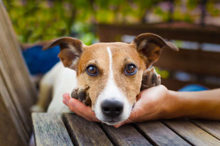 caress: owner  petting his dog, while he is sleeping or resting  with wide open tender eyes
