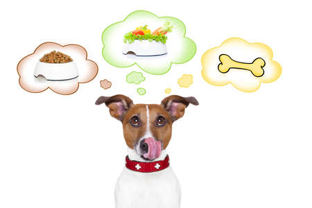 daydream: hungry jack russell dog thinking about the choice between food bowl, vegan bowl or  a big bone , in 3 speech bubbles, isolated on white background