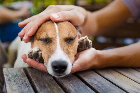 animals: propietario que acaricia a su perro, mientras que él está durmiendo o descansando con los ojos cerrados