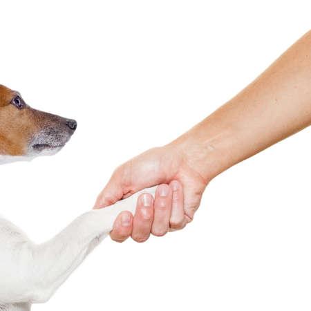 patas de perros: perro y el due�o del apret�n de manos o agitando las manos, con la pata de perro y mirando al titular, aislado en fondo blanco Foto de archivo