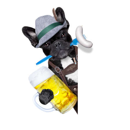 beerfest: cool bavarian german french bulldog  dog  with beer mug and sausage in mouth , behind blank empty banner or placard , isolated on white background Stock Photo