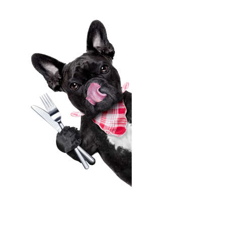 out to lunch: hungry french bulldog dog with tableware or utensils ready to eat dinner or lunch , behind white blank banner or placard, tongue sticking out , isolated on white background