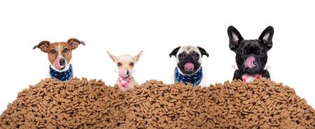 白い背景の分離した大きな行または食品、昼ご飯を食べて準備ができての大きなマウンドの後ろに空腹の犬のグループ