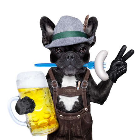 beerfest: cool bavarian german french bulldog  dog  with beer mug and sausage in mouth , victory or peace fingers , isolated on white background