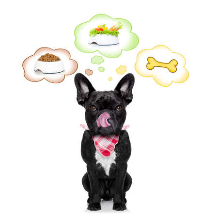 raw: hungry  french bulldog dog thinking about the choice between food bowl, vegan bowl or  a big bone , in  speech bubbles, isolated on white background Stock Photo