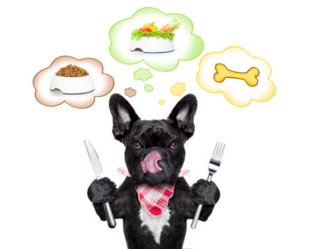 白い背景で隔離のフードボウル、ビーガン ボウルや、スピーチの泡での大きな骨の間の選択について考えて空腹フレンチ ブルドッグ犬