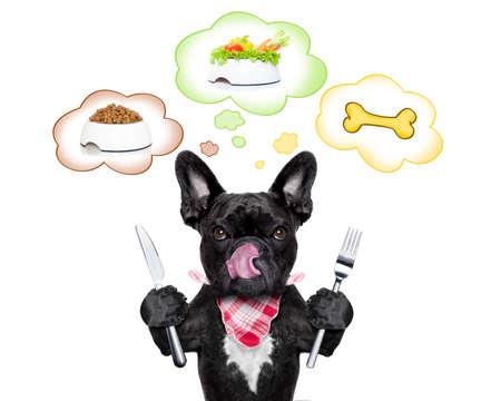reflexionando: hambriento perro bulldog franc�s de pensar en la posibilidad de elegir entre el plato de comida, taz�n vegano o un hueso grande, en globos de texto, aislado sobre fondo blanco