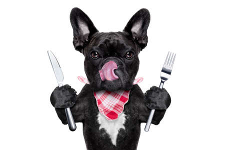 hungry french bulldog dog with tableware or utensils ready to eat dinner or lunch , tongue sticking out , isolated on white background