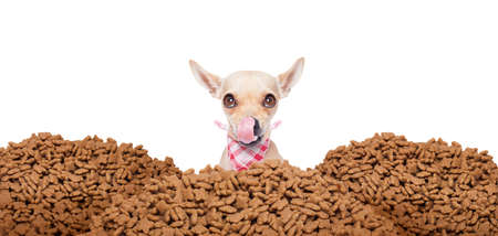 mound: hungry chihuahua dog behind a big mound or cluster of food ,  isolated on white background Stock Photo