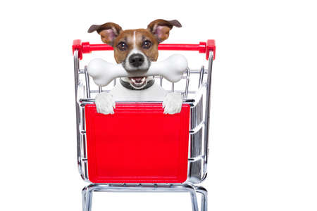 shopping cart isolated: jack russell dog inside a shopping cart trolley , behind  a blank  empty banner or placard, with a bone in mouth , isolated on white background Stock Photo