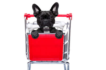 discounts: french bulldog dog inside a shopping cart trolley , behind  a blank  empty banner or placard, with a bone in mouth , isolated on white background