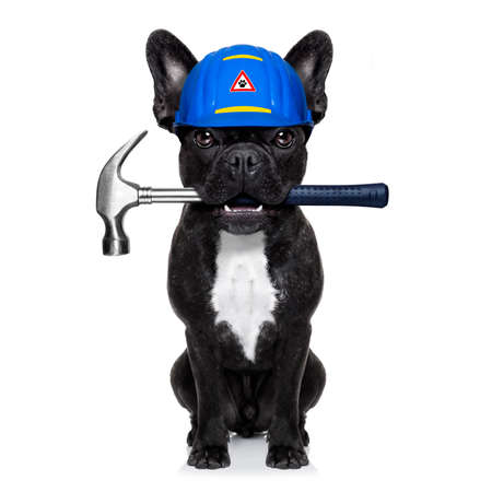 handyman dog worker with helmet and hammer in mouth, ready to repair, fix everything at home, isolated on white background