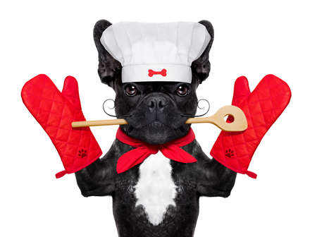 hunger: french bulldog dog chef cook  wearing cook or kitchen gloves, isolated on white background Stock Photo