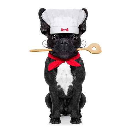 cook: french bulldog dog chef cook  with kitchen spoon in mouth, isolated on white background