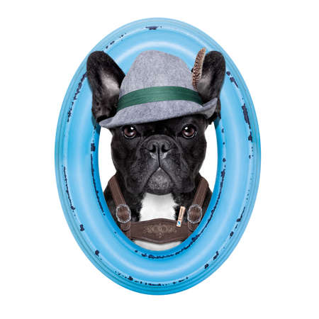 wiesn: french bulldog dog dressed up as bavarian oktoberfest  inside a blue wood frame , isolated on white background