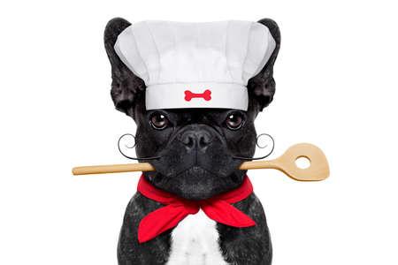 口の中、白い背景で隔離のキッチン スプーンでシェフ フレンチ ブルドッグ犬