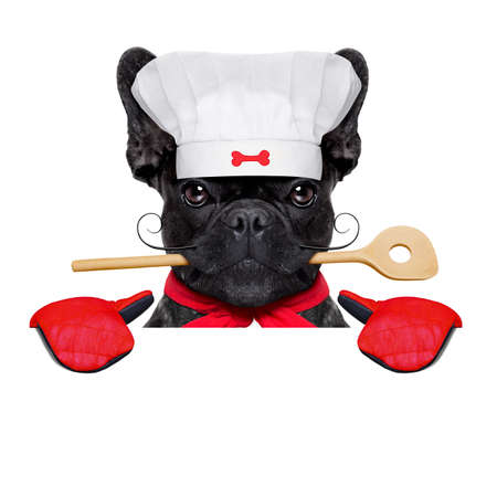placard: french bulldog dog chef cook behind a blank empty banner or placard,wearing kitchen gloves,  isolated on white background