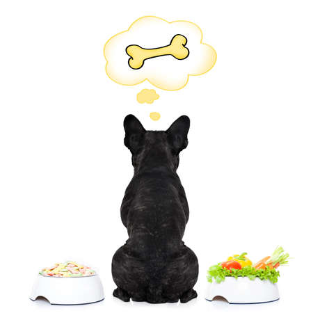 hungry  french bulldog dog thinking about the choice between food bowl, vegan bowl or  a big bone , in  speech bubbles, isolated on white background 写真素材