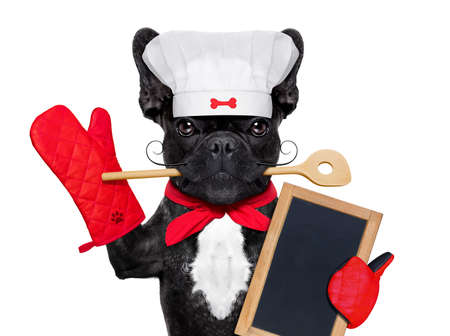 humour: french bulldog dog chef cook holding a blank empty blackboard or placard, isolated on white background