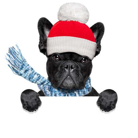 Französisch Bulldog Hund krank des schlechten und kalten Wetter, die Augen geschlossen, trägt einen Schal, isoliert auf weißem Hintergrund, hinter leere weiße Fahne
